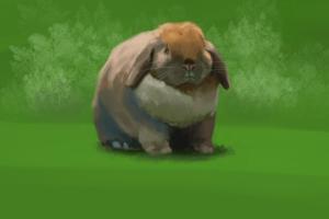 rabbitstudy