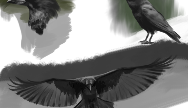 Raven Digital Painting Studies