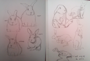 RabbitPencilSketches1